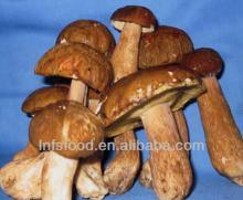 Wild Boletus porcini mushroom ,edible,good quality