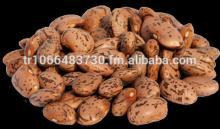 Long Shape Pinto Beans