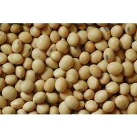 soybean,and white kidney beans