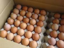 Fresh Table Eggs,Chicken hatching Eggs,Duck Eating Eggs,Duck hatching Eggs and Ostrich Eating Eggs.