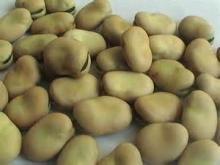 Broad Beans / Dried Fava Beans