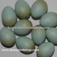 Dummy Eggs for Canary Birds and Finches