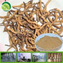 pure cordyceps sinensis extract
