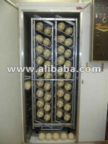 High Quality Fertile proven  Ostrich   eggs  for  sale