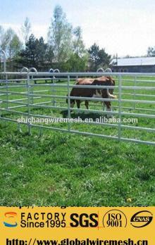 Cattle   Livestock  Yard