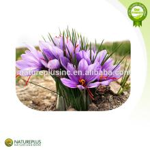 Saffron Extract/Saffron powder