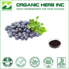 Herbal extract natural bilberry extract powder ,Anthocyanidins