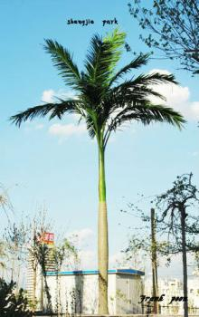 Fake/artificial King Coconut Tree for Ourdoor/indoor use