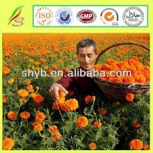 100% Pure & Natural High Quality Saffron Price
