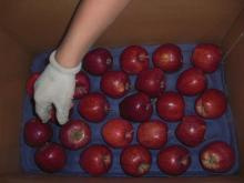 wholesale prices apple fruit of huaniu apple from china