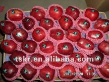 wholesale prices apple fruit apple fruit types of red apples