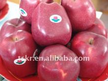 NEW red color Huaniu  apple   fresh   organic   apple s