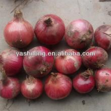 fresh onion export to dubai tastes Spicy and Hot