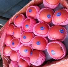 all sizes, high quality,Shandong fresh red fuji apple