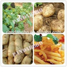 chinese organic fresh potato on hot sale with best price and quality