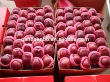 custard   apple   fruit  fresh huaniu  apple  fuji  apple  with best quality