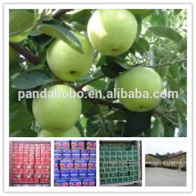 Wholesale chinese granny smith green apple gala apple in high quality as a supplier