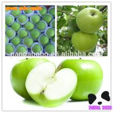 Nutrition Green Apple Fruits green gala apple in hot sale