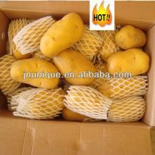 dutch   potato ,china vegetable