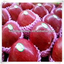 fresh red delicous sweet crispy vitamin and minerals Tianshui huaniu apple