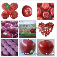 new crop fresh red delicous sweet crispy vitamin and minerals Tianshui huaniu apple