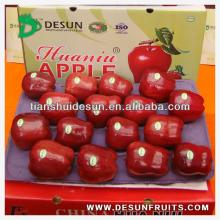 new crop 2013 fresh red delicous sweet crispy vitamin and minerals Tianshui huaniu apple
