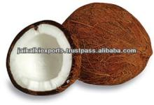 FARM FRESH COCONUTS FROM TAMILNADU