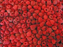 IQF Conventional Raspberry