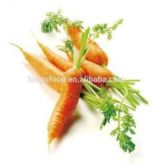Hot seller fresh carrot