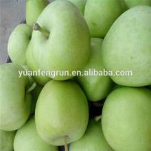 2014 crop Green Royal Gala Apple good quality 138#150#163#175#198#