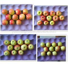 Shanxi  Royal  Gala  Apple  2014 new crop 100#113#125#138#150#163#175#198#