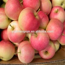 2014 Crop Red Shandong Royal Gala Apple Good price 100#113#125#138#150#163#175#198#