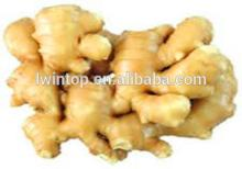 2013 high quality favorable price sushi ginger