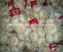 2014 new natural white fresh garlic