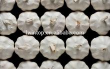 2014 China Cheap New Crop Wholesale Good Supplier of Agriculture Product Hot Fresh Normal White Garl