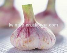 2014 new Chinese fresh natural white garlic