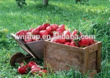 factory directly supply high quality fresh red fuji apple