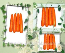 Carrots fresh carrots chinese carrot