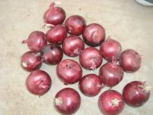 2014 new crop red onion from china small red onion red onion export to singapore
