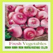 red onion export to Indonesia red onion importer from