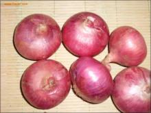 China fresh onion export to dubai