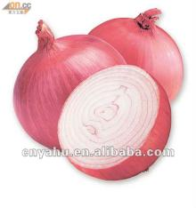export  to thailand fresh red  onion  red  onion  importers in singapore red  small   onion