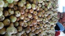 new crop fresh yellow onion export to east timor for indonesia yellow onion for  dubai