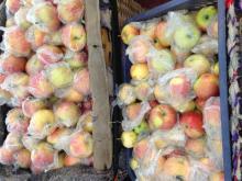 Chinese New Crop Fresh Gala Apple coming