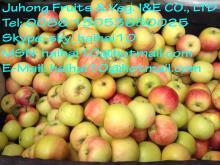 Royal  Fresh Chinese Gala  Apple  coming