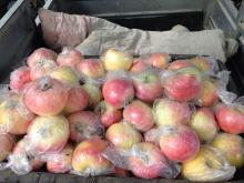 Chinese New Crop Royal Fresh Gala Apple coming