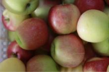 Royal Chinese Gala Apple Fresh New Crop 2014 crop