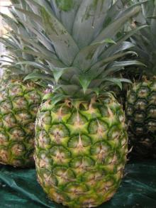 Pineapples  From   Bangladesh