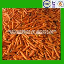 new crop hot sell Chinese fresh carrot price