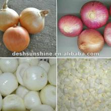 supplying Chinese 2012 new crop market onions with competitive prices